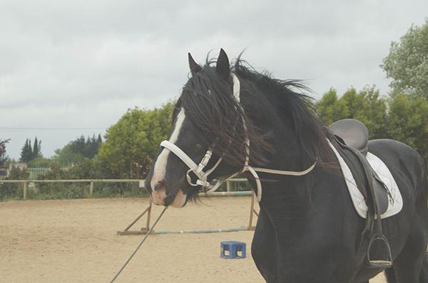 ecuries-centre equestre-pension pour chevaux-concours equestres-concours club-concours amateurs-concours jeunes chevaux-vente de chevaux-chevaux en vente