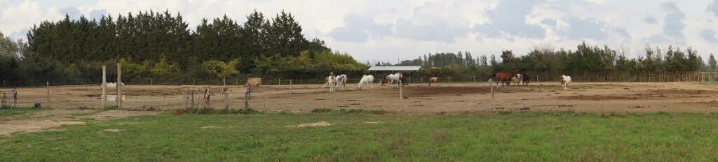 ecuries-centre equestre-pension pour chevaux-concours equestres-10