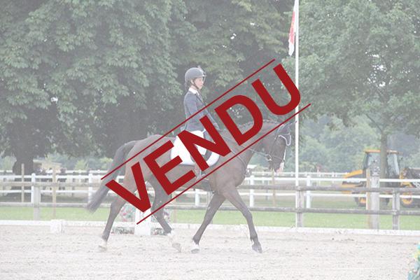 ecuries-centre equestre-pension pour chevaux-concours equestres-concours club-concours amateurs-concours jeunes chevaux-vente de chevaux-chevaux en vente-depot vente chevaux-sejours equestres-equitation
