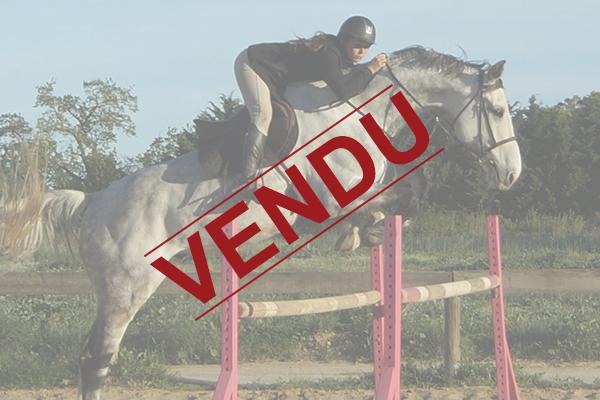 ecuries-centre equestre-pension pour chevaux-concours equestres-concours club-concours amateurs-concours jeunes chevaux-vente de chevaux-chevaux en vente-depot vente chevaux-sejours equestres-equitation Concours vauvert