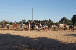 stages dequitation ete 2018 Concours vauvert