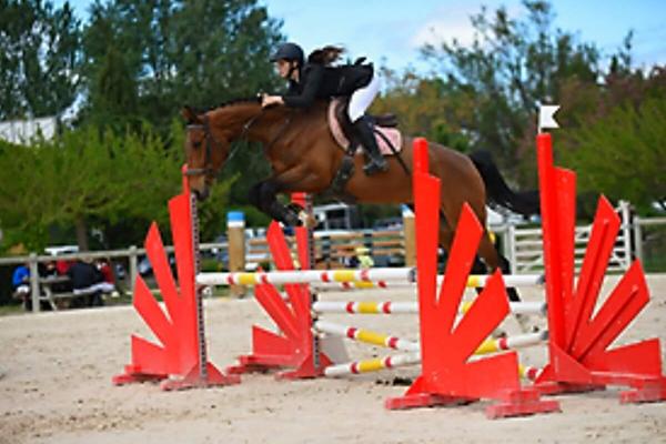ecuries-centre equestre-pension pour chevaux-concours equestres-concours club-concours amateurs-concours jeunes chevaux-vente de chevaux-chevaux en vente-depot vente chevaux-sejours equestres-equitation cours d'équitation saint laurent d'aigouze