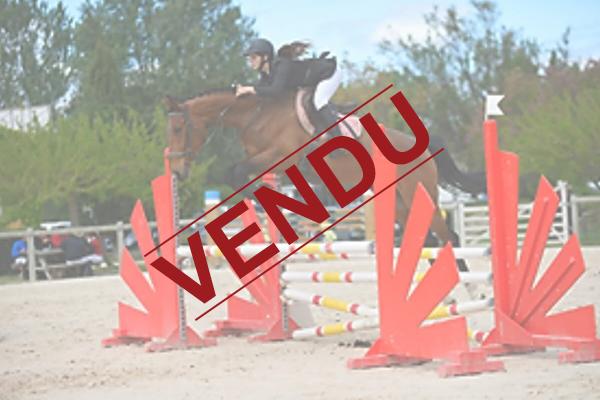 ecuries-centre equestre-pension pour chevaux-concours equestres-concours club-concours amateurs-concours jeunes chevaux-vente de chevaux-chevaux en vente-depot vente chevaux-sejours equestres-equitation Pension aigues mortes